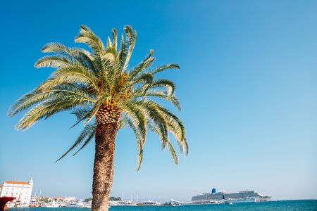 Palm tree and sea at Riva street in Split, Croatia