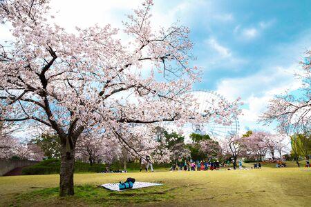 Expo '70 Commemorative Park at spring in Osaka, Japan Stockfoto