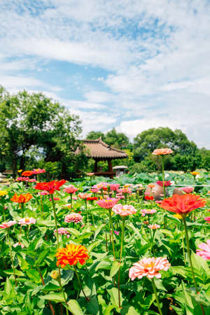 Colorful flower field with Korean traditional gazebo at Semiwon garden in Yangpyeong, Korea 스톡 콘텐츠 - 151336194