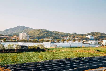 Farm field and greenhouse, countryside village landscape in Cheonan, Korea 免版税图像 - 152614218