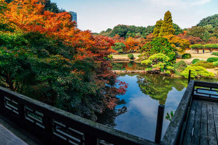 Shinjuku Gyoen park at autumn in Tokyo, Japan 免版税图像