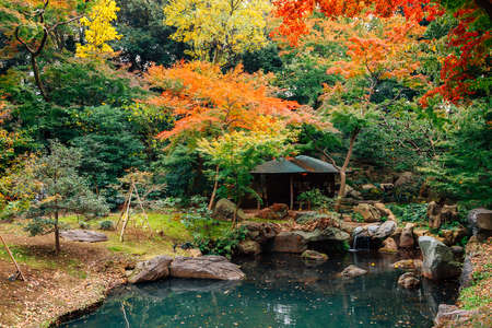 Pond with autumn maple forest at Rikugien Gardens in Tokyo, Japan