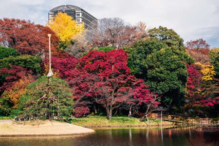 Pond with autumn maple forest at Koishikawa Korakuen Garden in Tokyo, Japan
