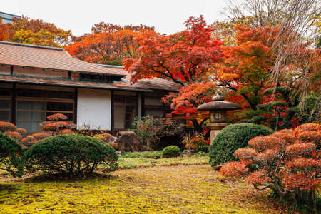 Japanese traditional house with autumn maple trees at Koishikawa Korakuen Garden in Tokyo, Japan 免版税图像 - 152584807