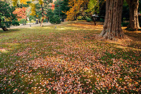Autumn fallen leaves with maple forest at Rikugien Gardens in Tokyo, Japan