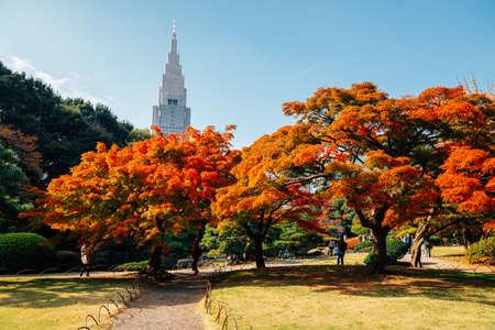 Shinjuku Gyoen park at autumn in Tokyo, Japan 免版税图像 - 152584793