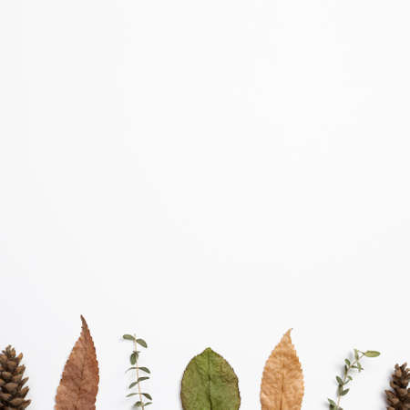 Autumn dry leaves on white background. flat lay, top view, copy space 免版税图像 - 152694542