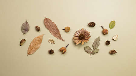 Autumn dry leaves on khaki brown background. flat lay, top view, copy space 免版税图像 - 152694544