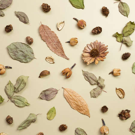 Autumn dry leaves on khaki brown background. flat lay, top view 免版税图像