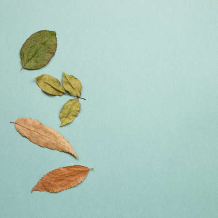 Autumn dry leaves on green background. flat lay, top view, copy space 免版税图像 - 152694555