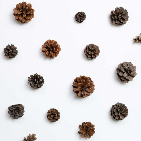 Autumn dry pine cones on white background. flat lay, top view 免版税图像