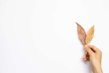 Hand picking autumn dry leaves on white background. top view, copy space 免版税图像 - 152694571