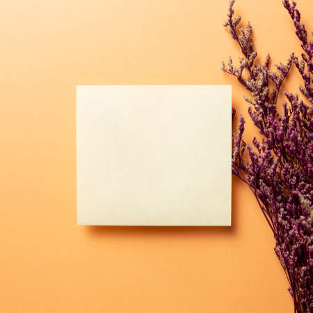 Blank empty paper with pink misty blue dry flowers on orange background. top view, copy space