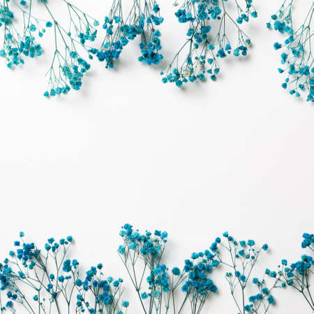 Blue baby's breath, gypsophila dry flowers on white background. flat lay, top view, copy space
