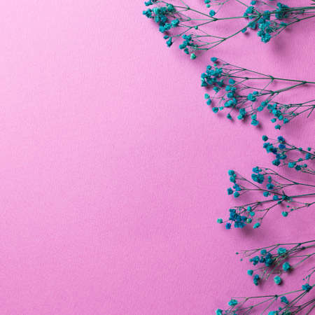 Blue baby's breath, gypsophila dry flowers on pink background. flat lay, top view, copy space 免版税图像