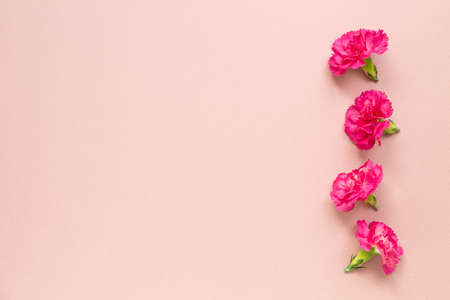 Pink carnation flowers on pink background. flat lay, top view, copy space