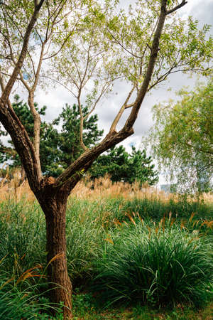 Green tree and reed field at Songdo Central Park in Incheon, Korea 免版税图像