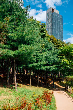 Green trees road at Songdo Central Park in Incheon, Korea