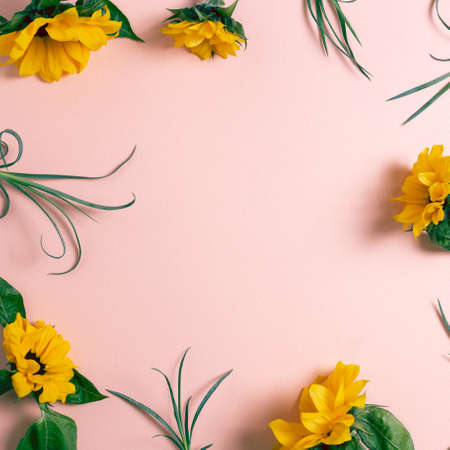 Yellow sunflowers on pink background. flat lay, top view, copy space