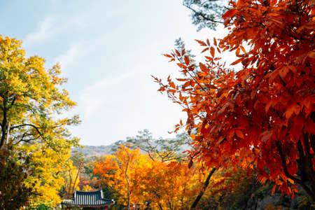 Bukhansan mountain maple forest in Seoul, Korea
