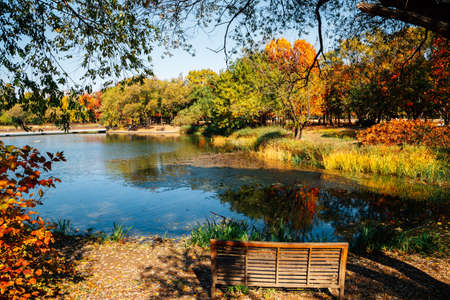 Seoul forest park, pond with autumn colorful trees in Korea 免版税图像