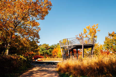 Seoul forest park, Autumn maple trees and observatory in Korea