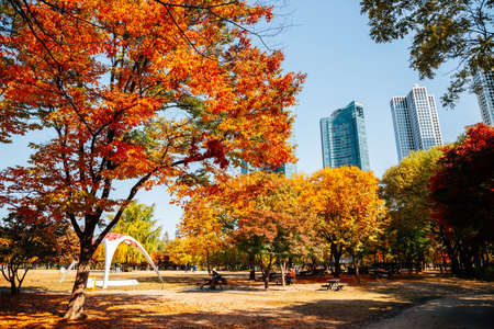 Seoul forest park, Autumn colorful trees with modern buildings in Korea