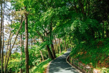 Jasan Park green forest road in Yeosu, Korea