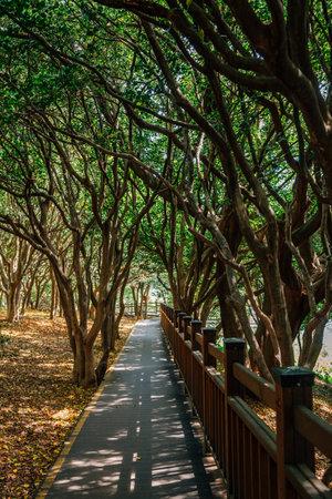 Odongdo Island forest road in Yeosu, Korea