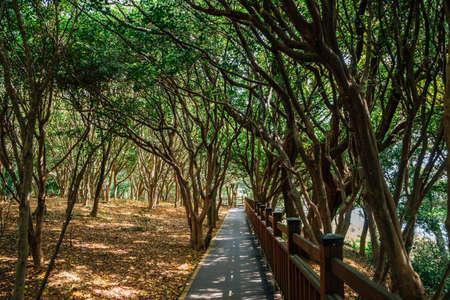 Odongdo Island forest road in Yeosu, Korea 免版税图像 - 168681563