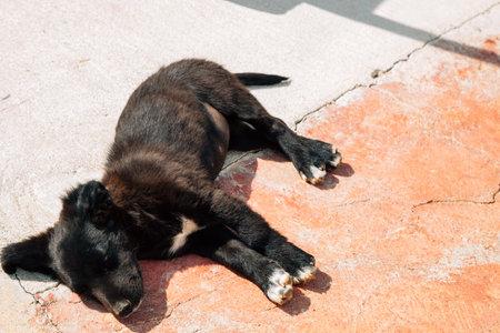 Sleeping dog on the street