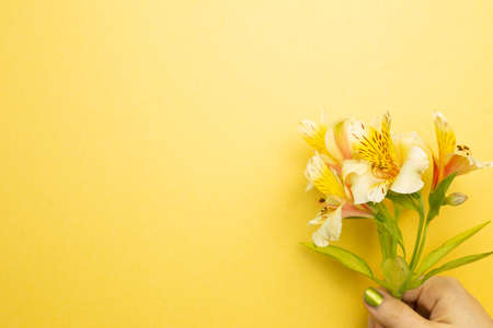 Hand holding Alstroemeria flowers on yellow background. top view, copy space
