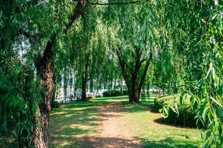 Ilsan Lake Park green forest in Goyang, Korea