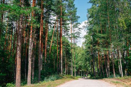 Kemeri National Park green forest in Latvia