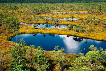 View of Kemeri National Park swamp in Latvia