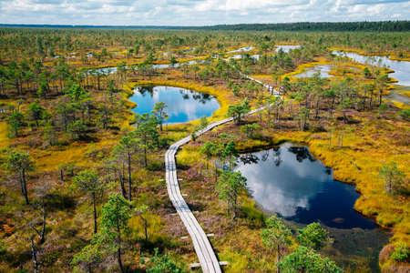 View of Kemeri National Park Bog trail in Latvia 免版税图像