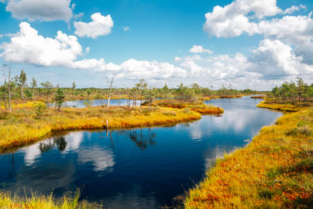 Kemeri National Park swamp in Latvia 免版税图像