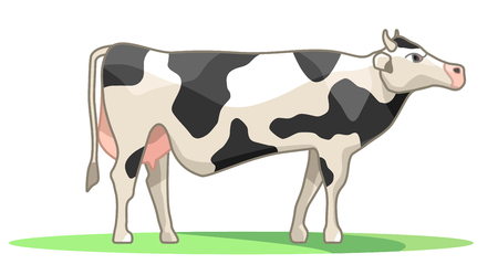 Spotted cow in black and white colors. Farming, village life. Pet. Grazing in the meadow side view. Vector isolated on white background Illustration