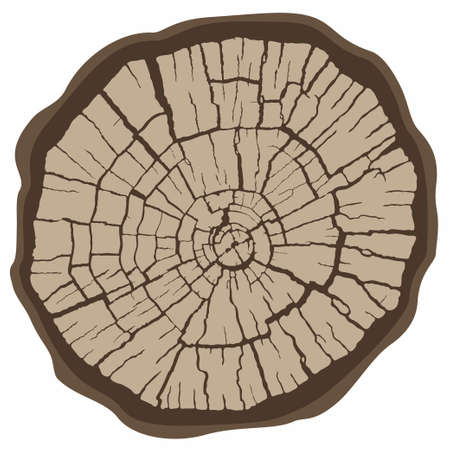 Tree stump, round cut with dry cracked wood rings. Vectores