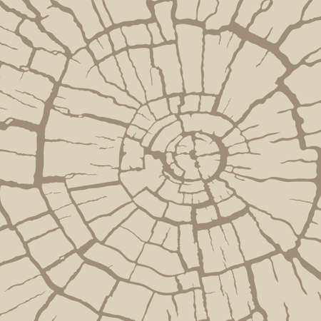 Cracked wood texture, radial cross section. Wooden cut of a tree log. Pattern of cracks on an old stump. Vector background