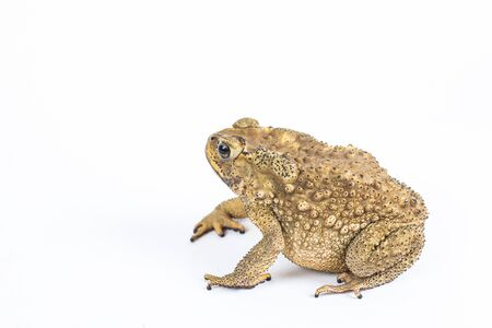 Toad in closeup shot  photo