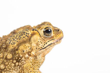 shot: Toad in closeup shot