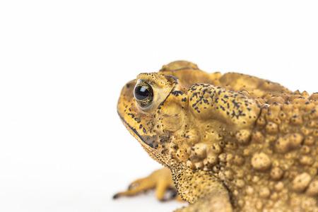 closeup: Toad in closeup shot