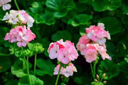 Flower in Thailand Stock Photo