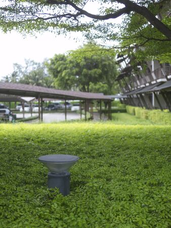 stand out: Electric light stand out from green annual crops