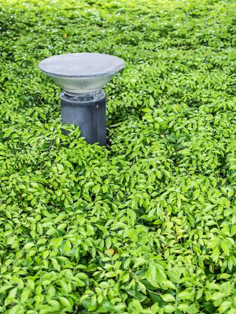 actual: Street Light on green actual crops