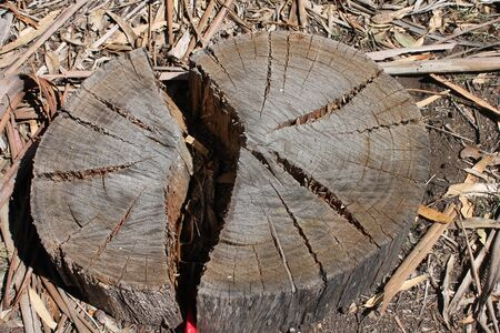 the split: Split Stump