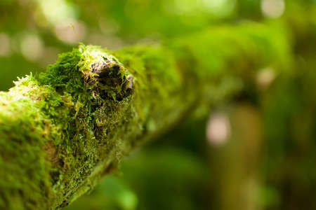 green moss on decaying dry branch