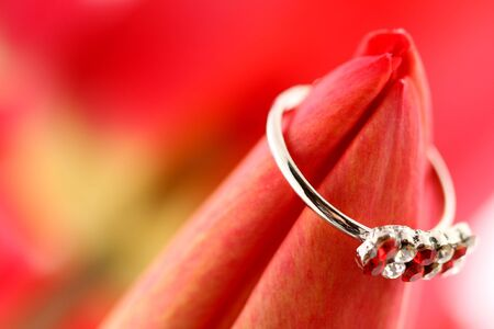 Red tulip with ring on a red background Foto de archivo