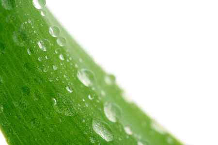 Green leaf with drops, isolated on white photo